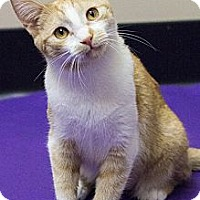Adopt A Pet :: Tinkerbell - Chicago, IL
