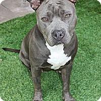 Adopt A Pet :: Annabelle - San Diego, CA