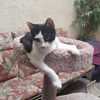 Adopt A Pet :: Kadee - Chino, CA
