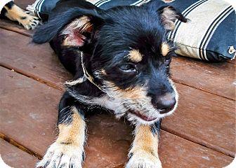 Terrier (Unknown Type, Small) Mix Dog for adoption in Savannah, Georgia - Desi