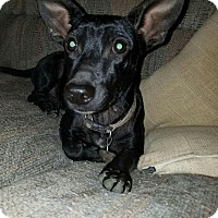 Adopt A Pet :: Poco IN CT - Manchester, CT