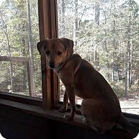 Adopt A Pet :: Levi - North Brunswick, NJ