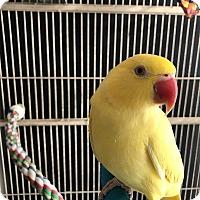 Adopt A Pet :: Rosebud - Lenexa, KS