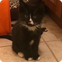 Adopt A Pet :: Genny (Genesis) - McHenry, IL