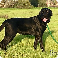 Adopt A Pet :: Bruno - Clovis, CA