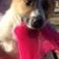Retriever (Unknown Type) Mix Dog for adoption in Jefferson, Texas - Delilah