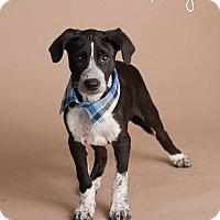 Adopt A Pet :: Tango - Scottsdale, AZ