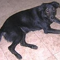 Irish Setter Mix Dog for adoption in Miami, Florida - Rachel