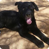 Adopt A Pet :: Rita - Tucson, AZ