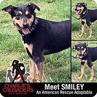 Adopt A Pet :: Smiley - Spring City, PA