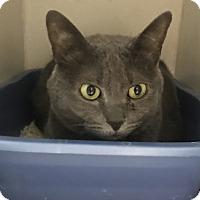 Adopt A Pet :: Riku - Newport, NC