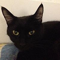Adopt A Pet :: Starlight - Alamogordo, NM