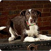 Adopt A Pet :: Beth - Owensboro, KY