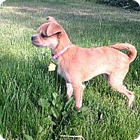 Adopt A Pet :: Lulu - Commerce City, CO