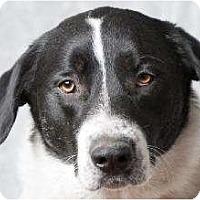 Adopt A Pet :: Casper - Seattle, WA