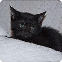 Adopt A Pet :: Shadow - New Egypt, NJ