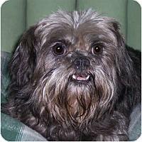 Adopt A Pet :: EFFIE - ADOPTION PENDING - Sun Prairie, WI