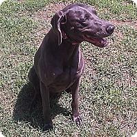 Adopt A Pet :: Bailey - Grand Haven, MI