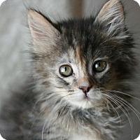 Adopt A Pet :: Darla - Canoga Park, CA