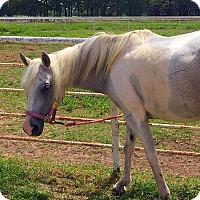 Adopt A Pet :: Dolly - Farmersville, TX