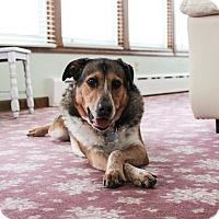 Adopt A Pet :: Rebecca - in Maine - kennebunkport, ME