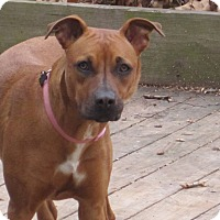 Adopt A Pet :: Lilly - Winchester, VA