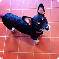Adopt A Pet :: Joseph - Tillamook, OR