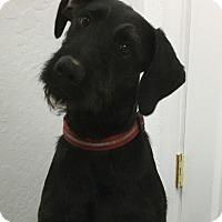 Adopt A Pet :: Oakley - Grants Pass, OR