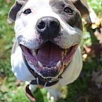 Adopt A Pet :: Kane - Ozone Park, NY