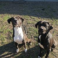 Adopt A Pet :: Deuce - Orlando, FL