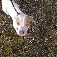 Adopt A Pet :: Crystal - Channahon, IL