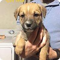 Adopt A Pet :: Enid - Mission, KS