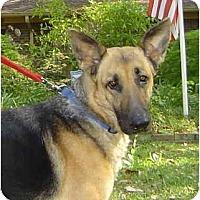 Adopt A Pet :: Millie - Pike Road, AL