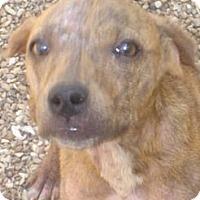 Adopt A Pet :: Lilo - Stilwell, OK