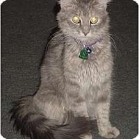 Adopt A Pet :: Amelia - Franklin, NC