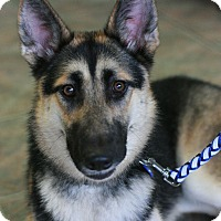 Adopt A Pet :: Brandi - Canoga Park, CA