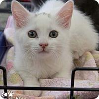 Adopt A Pet :: Mae - Merrifield, VA