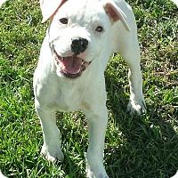 Adopt A Pet :: Nikki - Orange Lake, FL