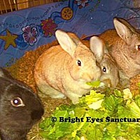 Adopt A Pet :: Brownie&Goldie&Blackie&Sandy - Rockville, MD