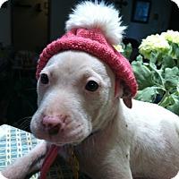 Adopt A Pet :: Leonie - Boerne, TX