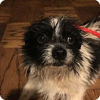Adopt A Pet :: Roosevelt - Astoria, NY