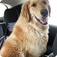 Adopt A Pet :: Eban - BIRMINGHAM, AL