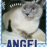 Adopt A Pet :: Angel - Edwards AFB, CA