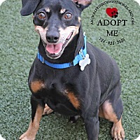 Adopt A Pet :: Ricco - Youngwood, PA