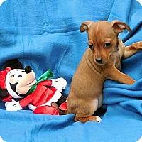 Adopt A Pet :: Peanut - Staunton, VA