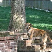 Adopt A Pet :: Rosco - Alexandria, VA