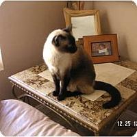 Adopt A Pet :: BIG MAC - Phoenix, AZ