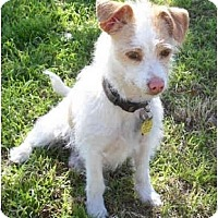 Adopt A Pet :: WOODY - Phoenix, AZ