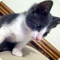 Adopt A Pet :: Devon - Denton, TX