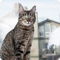 Adopt A Pet :: Fiona - Vancouver, BC